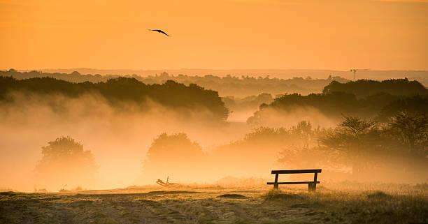 foggy sunrise over richmond park - richmond park stock photos and pictures