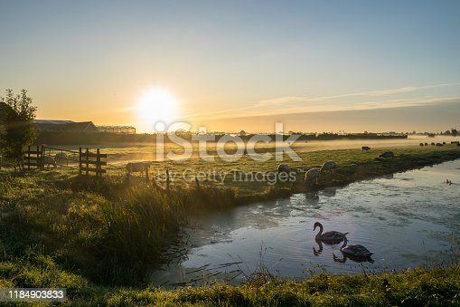 Scenic image of the sun rising over the dutch landscape. Swans are swimming in the calm water of a pond while sheep are grazing in a meadow covered with dew.