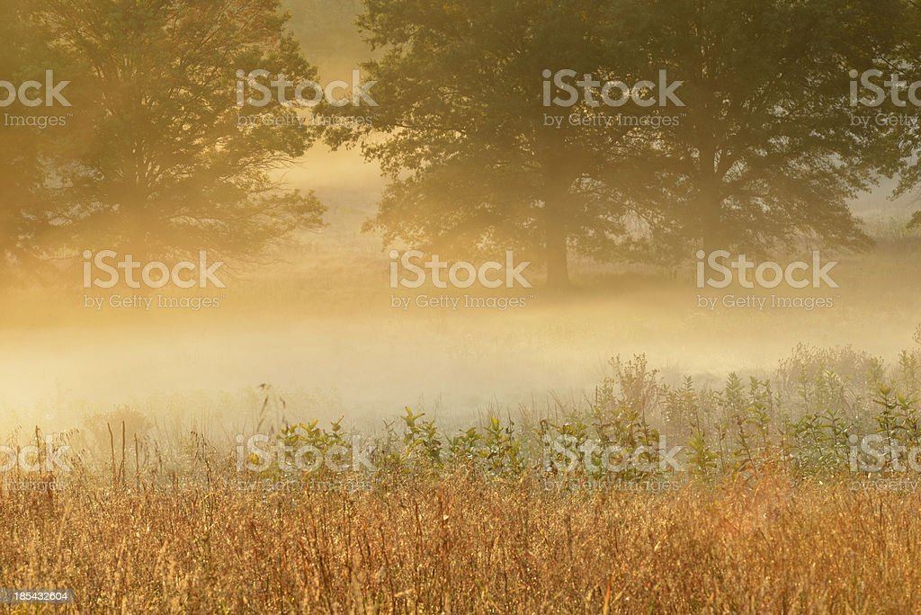 Foggy Sunrise royalty-free stock photo