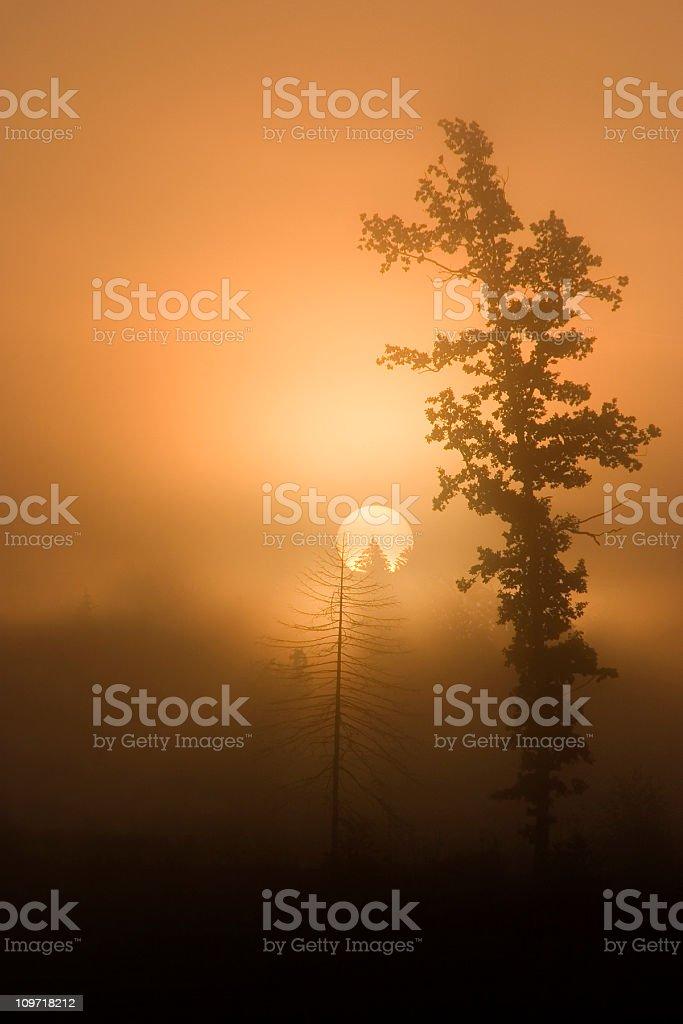 foggy sunrise with tree royalty-free stock photo
