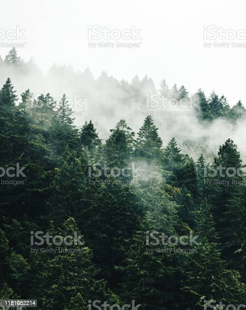 Photo of foggy tree in the forest