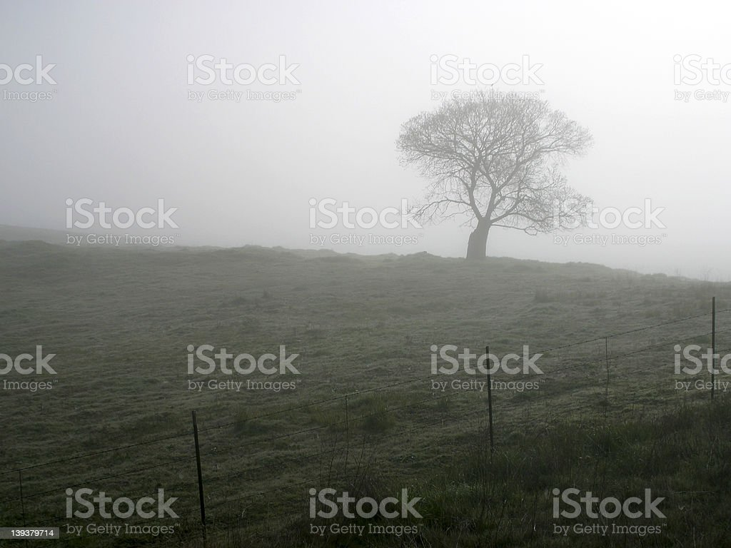 Foggy Tree – Foto