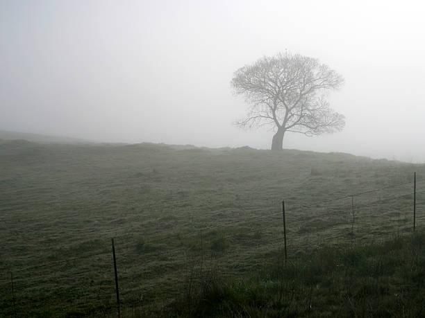 Foggy Tree – Foto