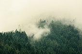 Fog is drifting across the tree tops on the mountains ridges of Olympic National Park in Washington State.