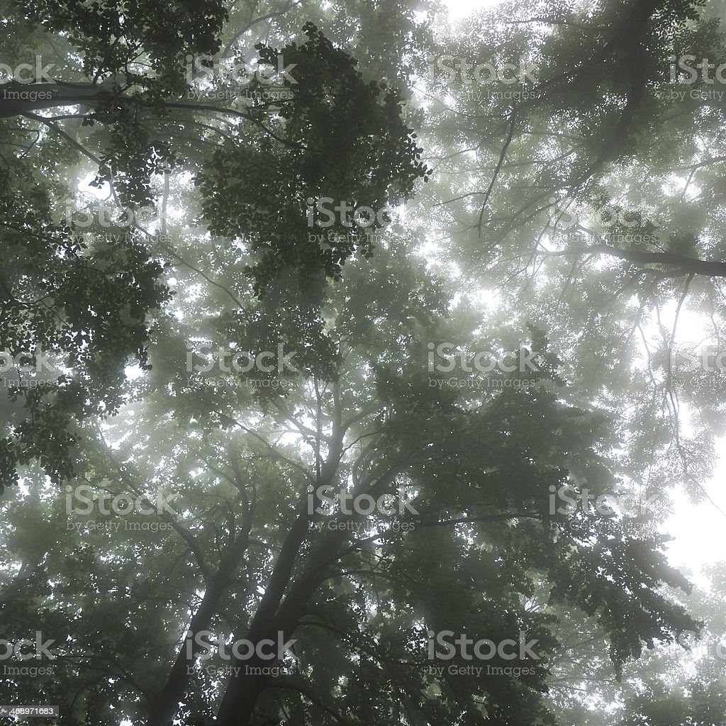 Foggy tree tops royalty-free stock photo