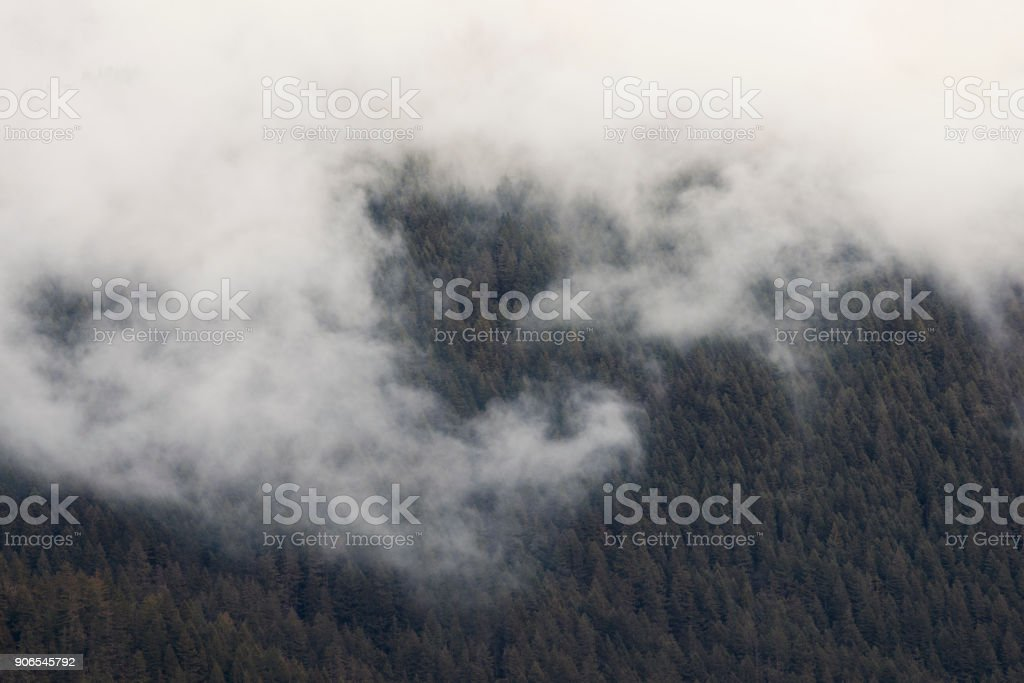 Foggy Wilderness - Royalty-free Cold Temperature Stock Photo
