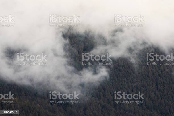 Foggy Wilderness Stock Photo - Download Image Now