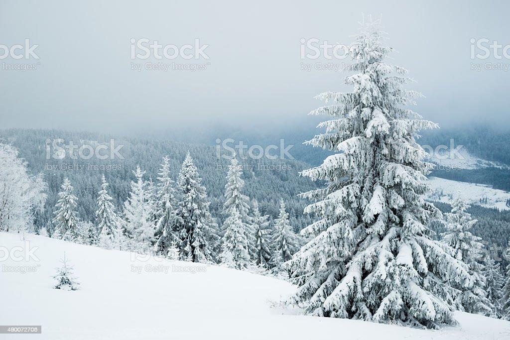 Neblig winter Tanne in den Bergen – Foto