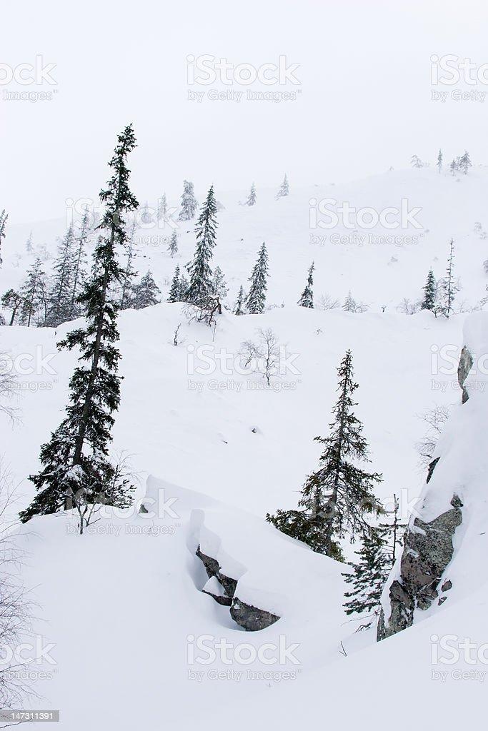 Foggy winter landscape royalty-free stock photo
