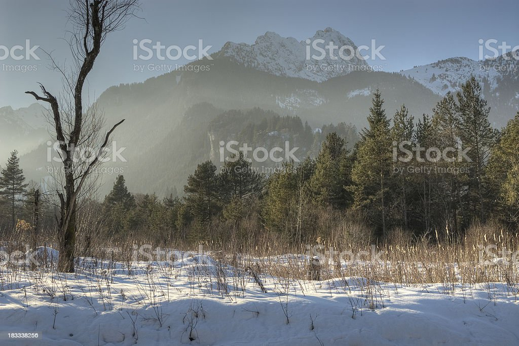 Foggy Winter Landscape with lonely tree royalty-free stock photo