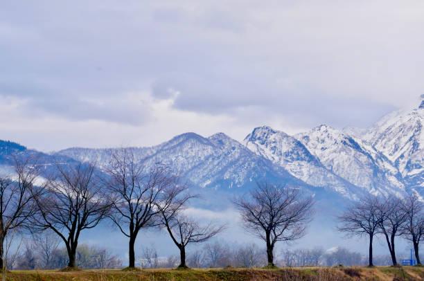霧濛濛的冬季山脈和樹木圖像檔