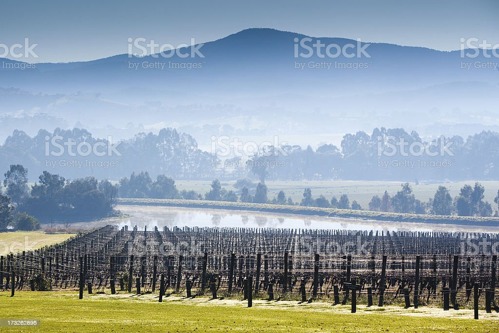 Foggy Yarra Valley During Winter stock photo