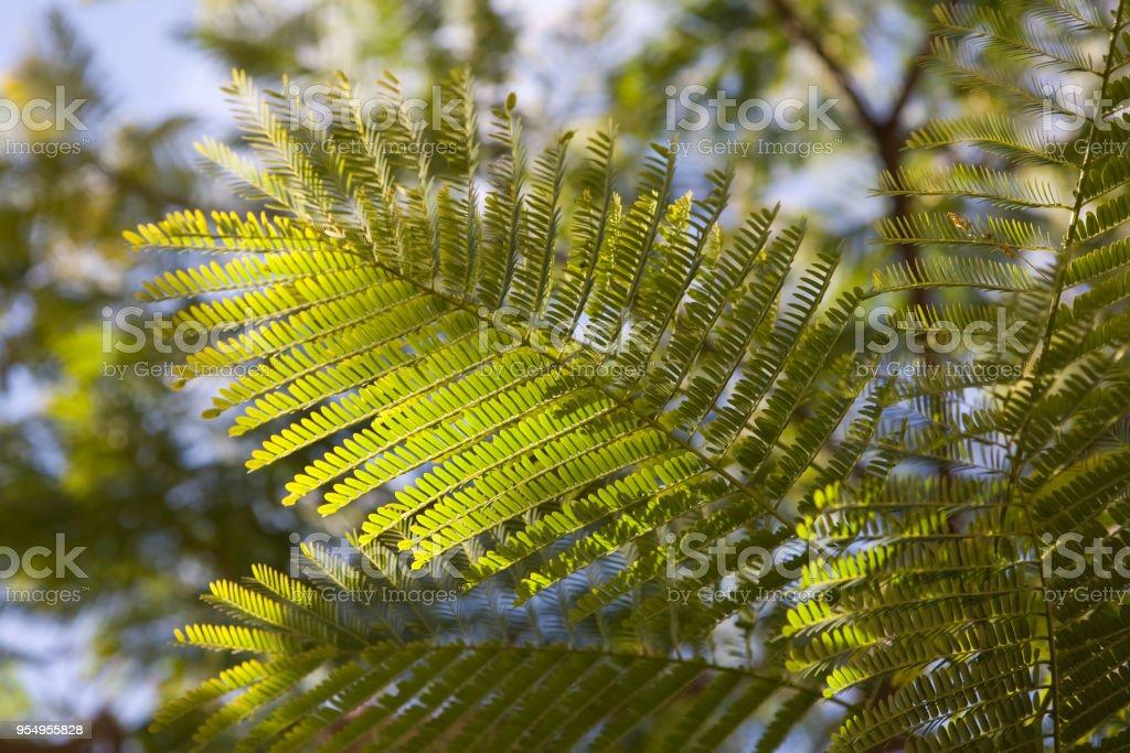 Foglia tropicale - foto stock