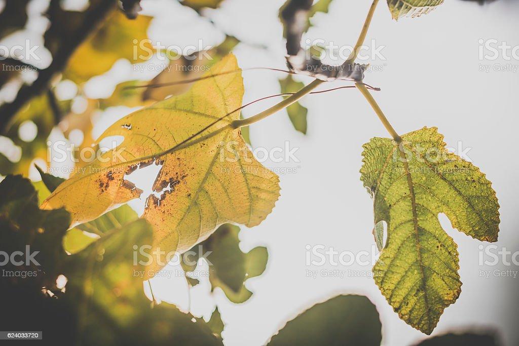Foglie d'autunno stock photo