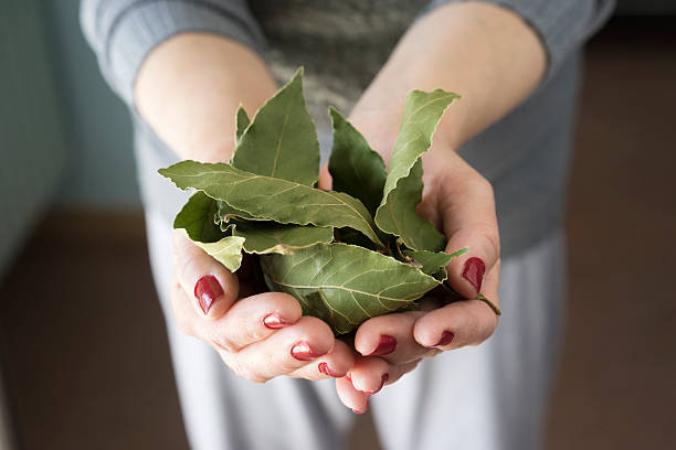 foglie di alloro - herbst nagellack stock-fotos und bilder