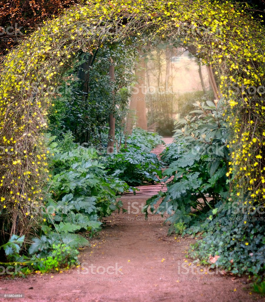 Foilage Lined Dirt Path with Yellow Flower Arbor stock photo