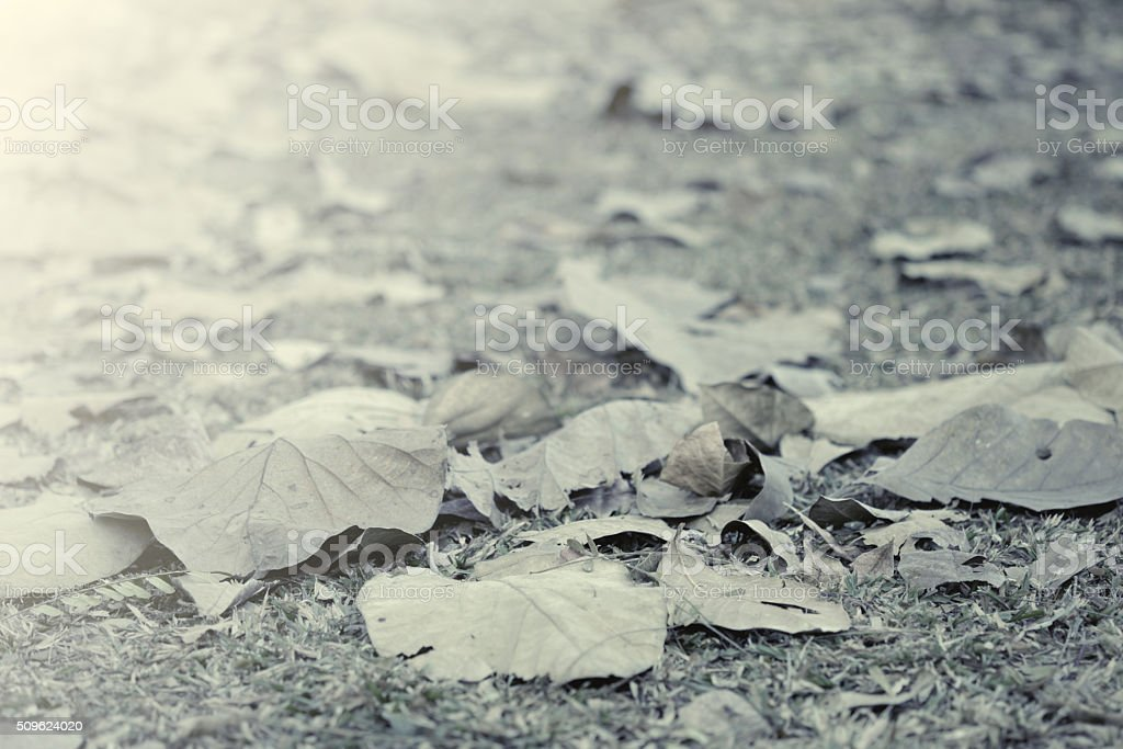 Foilage on the ground stock photo