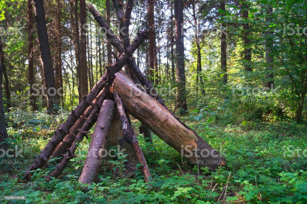 Folded wood in the Yakhroma summer green forest stock photo