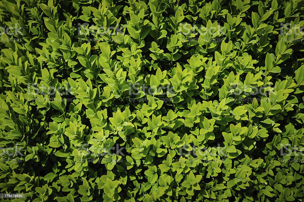 Foliage Background stock photo