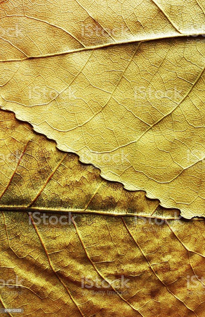 Foliage background royaltyfri bildbanksbilder