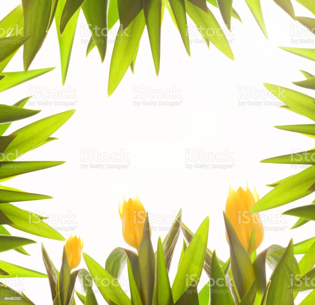 Foliage border royalty-free stock photo