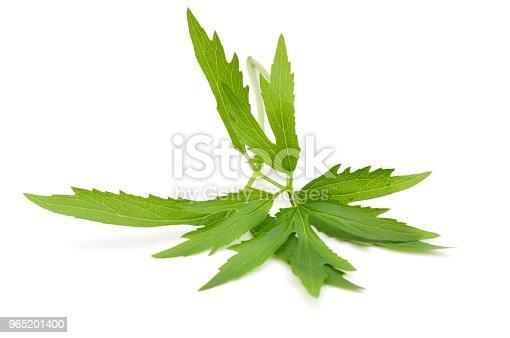 Foliage Chamomile Leaf Isolated White - Stockowe zdjęcia i więcej obrazów Abstrakcja