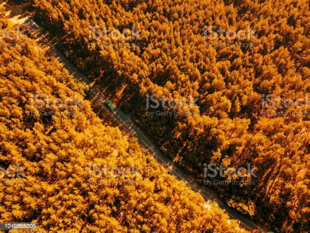 Foliage green forest with asphalt road on sunny day natural beautiful picture id1249855205?b=1&k=6&m=1249855205&s=612x612&h=lusfcblwj7cdb7bbceflkezlnevj8ezqaijbohjbq2m=