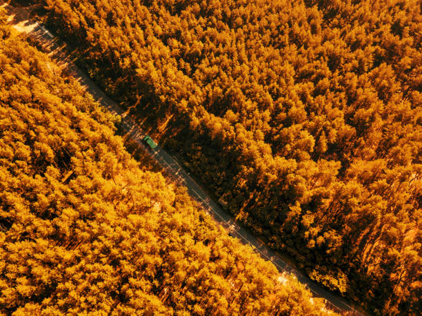 Foliage green forest with asphalt road on sunny day natural beautiful picture id1249855205?b=1&k=6&m=1249855205&s=612x612&w=0&h=rhrf5ywdhb1jvfn vawbrm5vlyudqrkbpwhgeuv h4u=