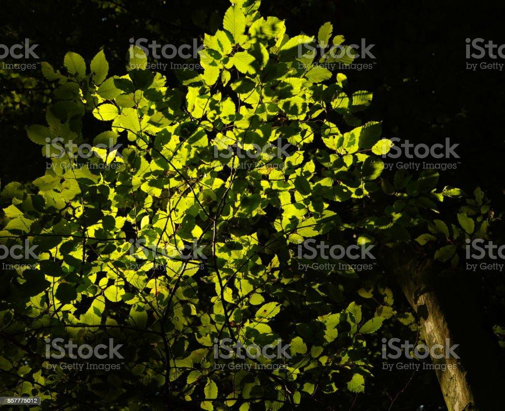 Blattwerk in leuchtendem Grün stock photo
