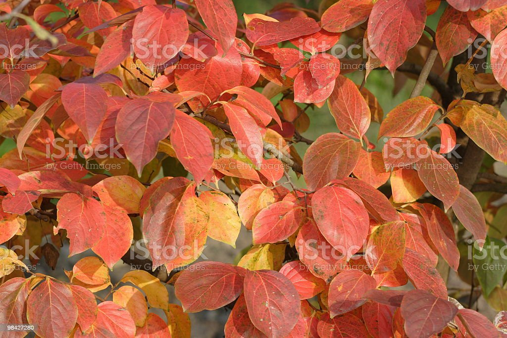 Foliage in Ferrara royalty-free stock photo