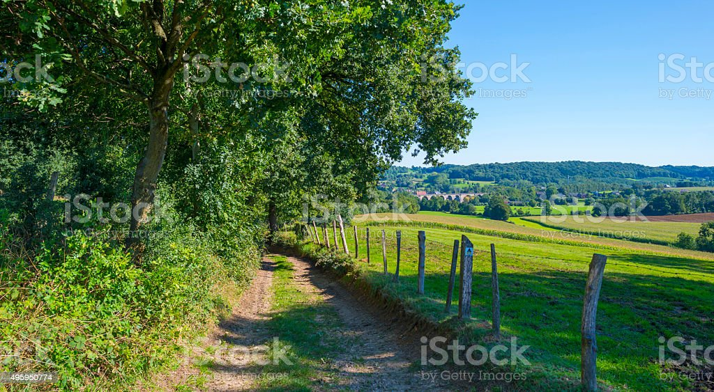 Foliage of a forest in sunlight in summer stock photo