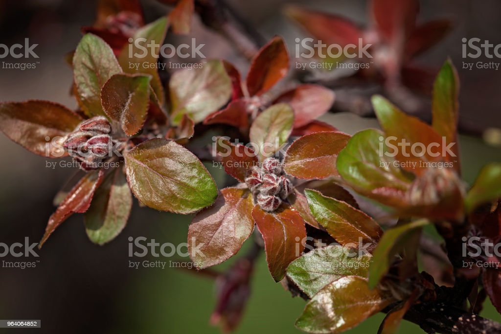 foliage of autumn roses - Royalty-free Abstract Stock Photo