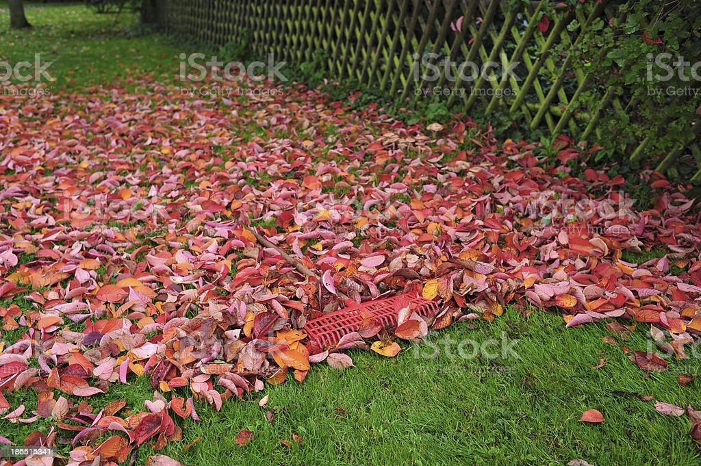 foliage royalty-free stock photo