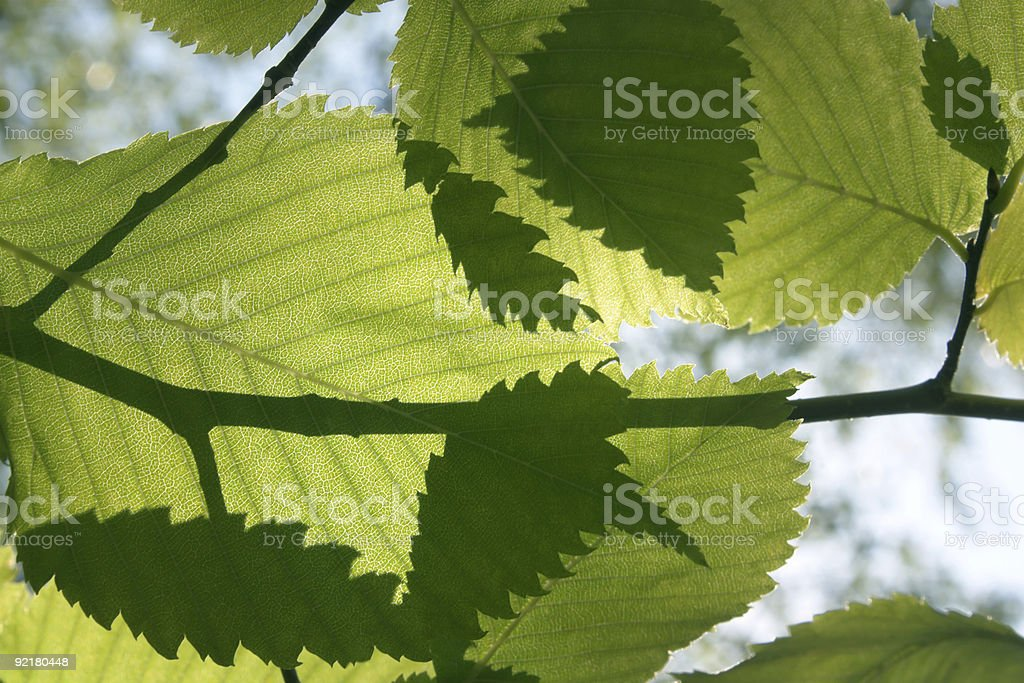 Foliage royalty-free stock photo