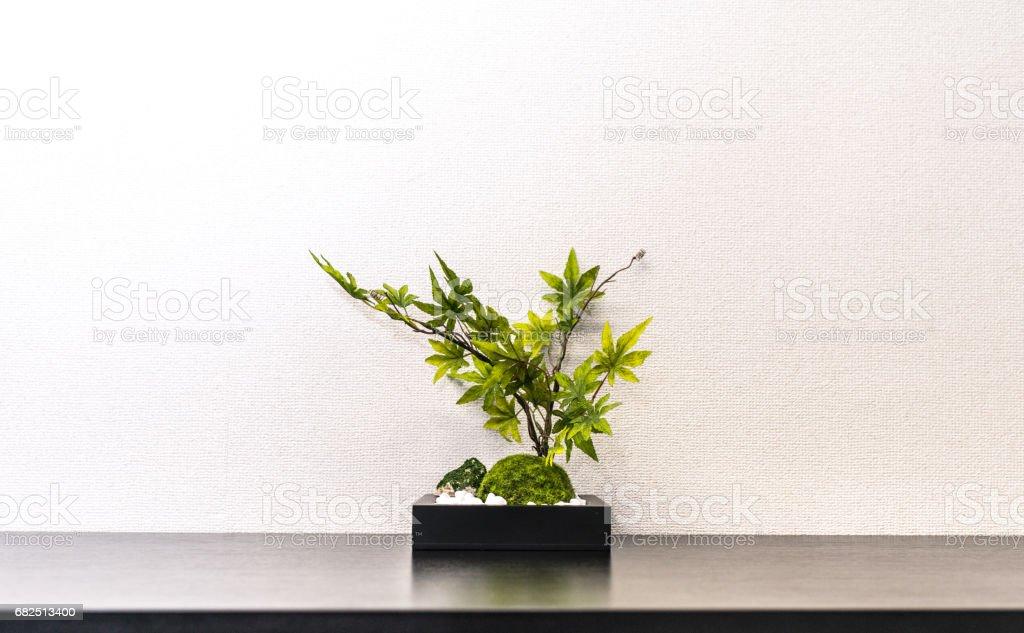 Blattpflanze im Büro Lizenzfreies stock-foto