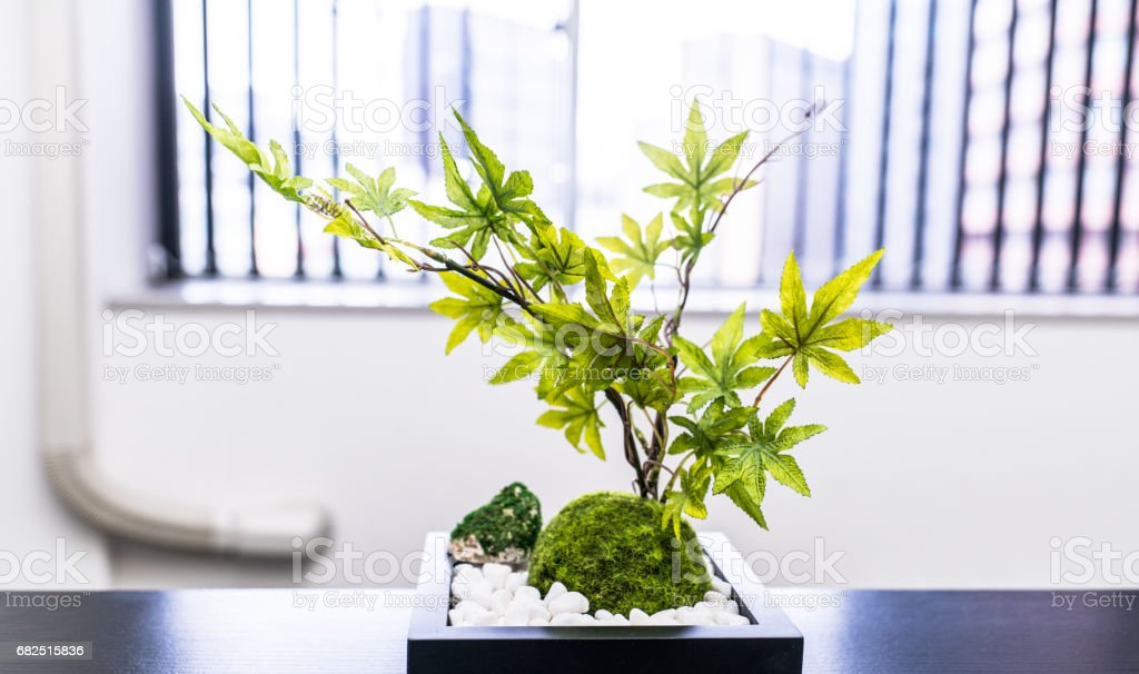Foliage plant in the office foto stock royalty-free
