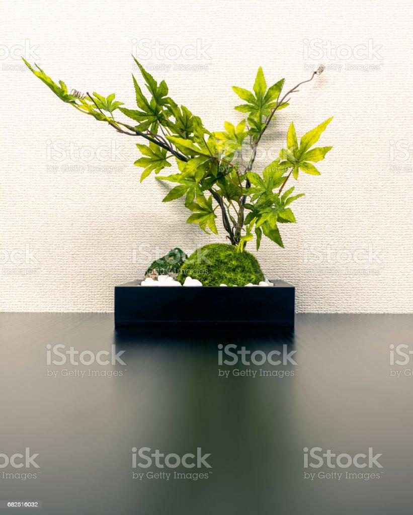 Planta de follaje en la oficina foto de stock libre de derechos