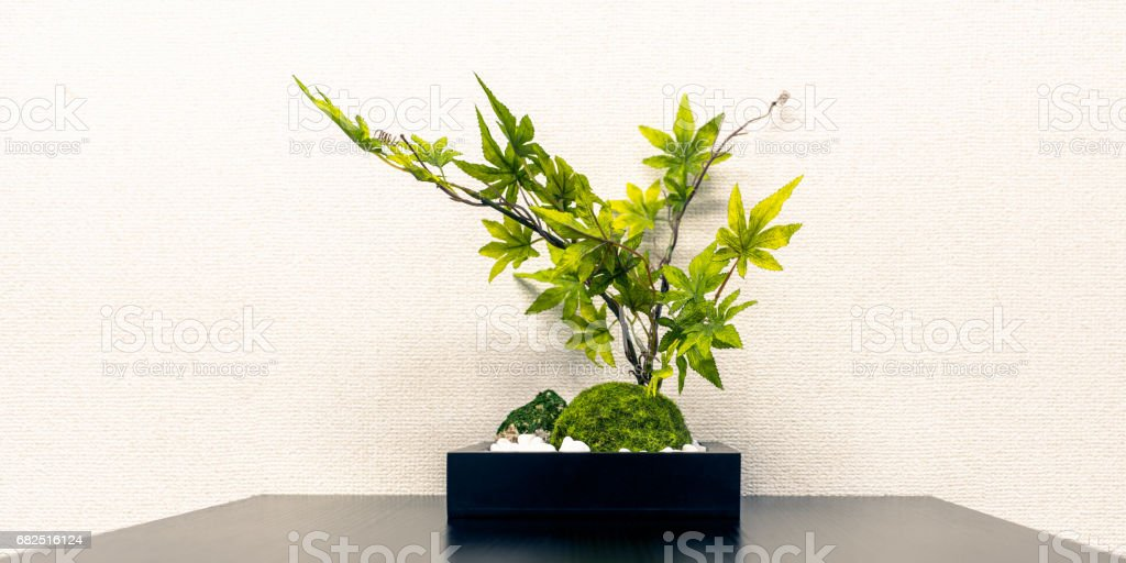 Foliage plant in the office royalty-free stock photo