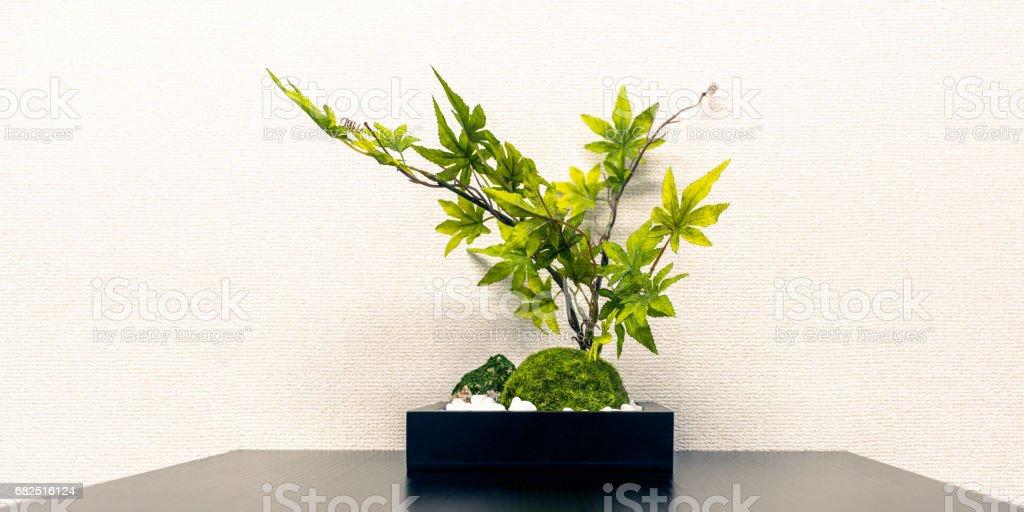 Ofiste bitki örtüsü bitki royalty-free stock photo