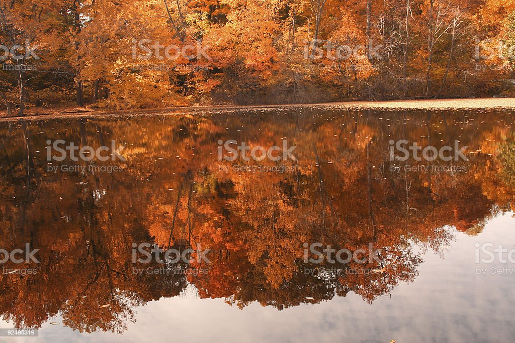 Foliage reflection in the small pond royalty-free stock photo