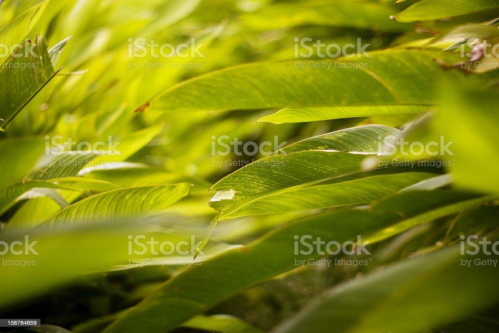 foliage; thick lush green leafy bush abstract royalty-free stock photo
