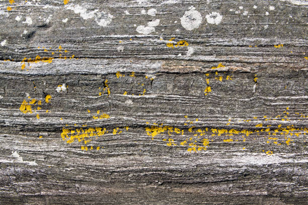 Foliated rock covered with yellow and white lichen at shore stock photo