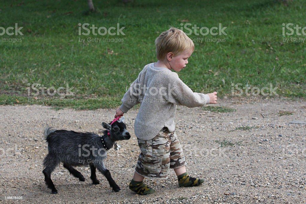 Follow Me Young Boy pulling along young pygmy goat Pygmy Goat Stock Photo
