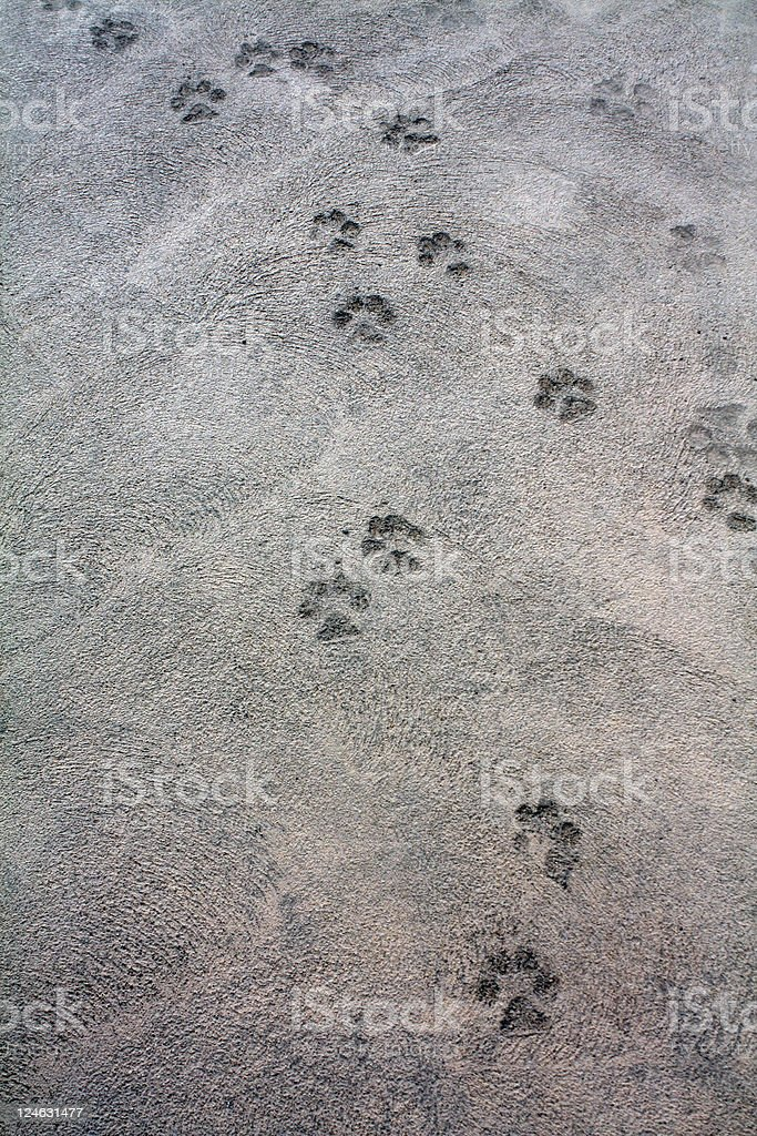 Follow the Path royalty-free stock photo