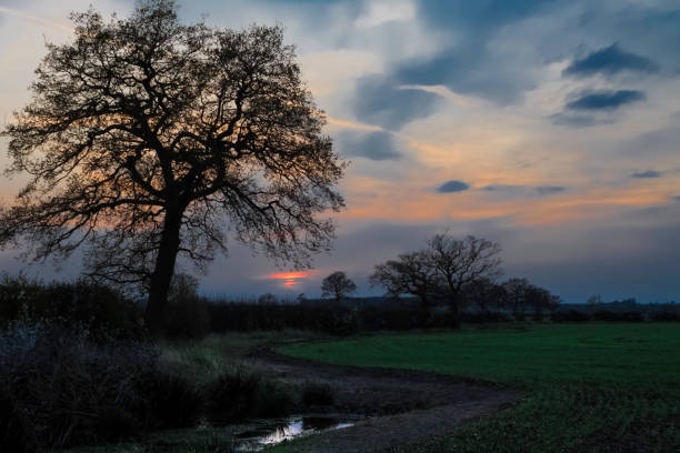 Follow the river by the tree to find the sunset stock photo