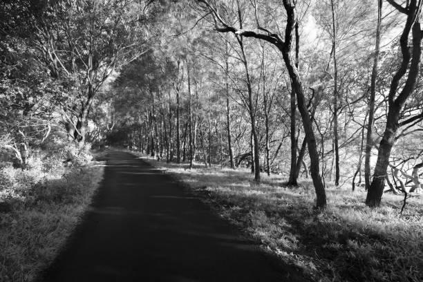 Follow_path_through_dense_trees_monochrome stock photo