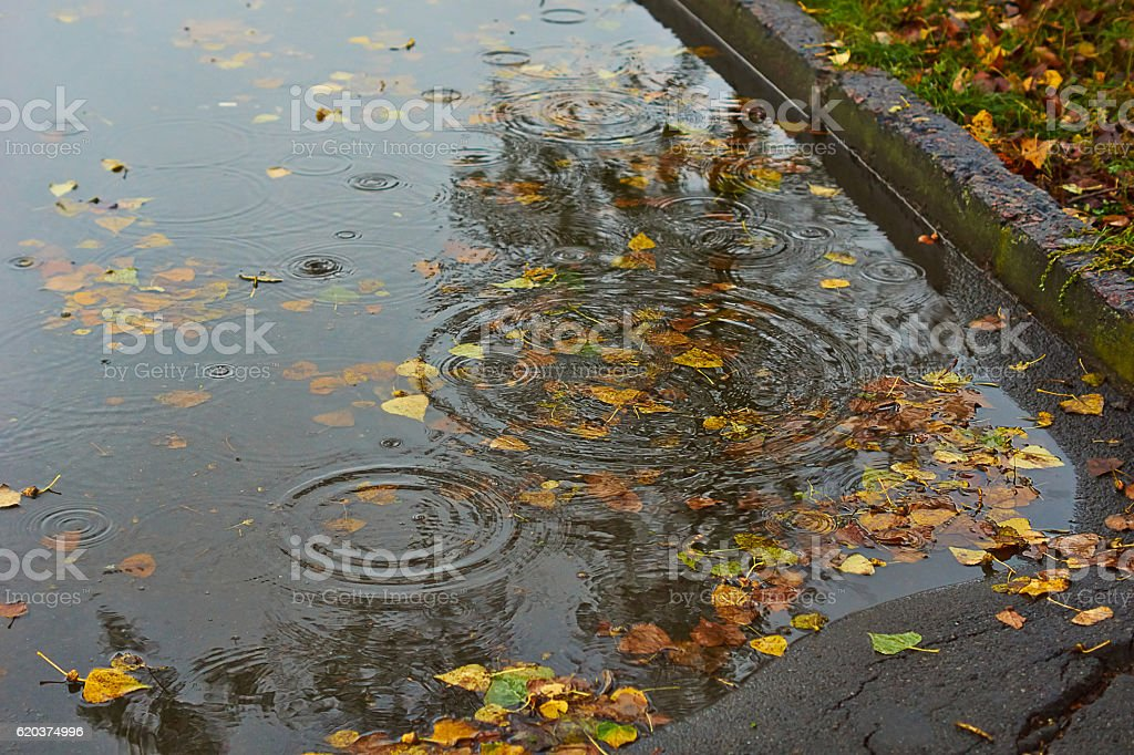 Followed by rain   in autumn puddle. zbiór zdjęć royalty-free