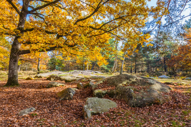 Fontainebleau Forest stock photo