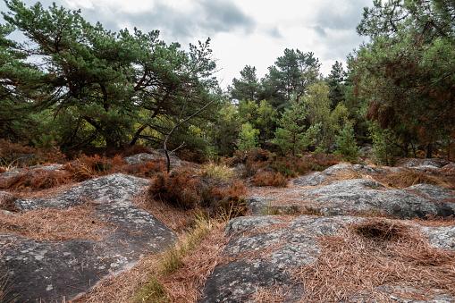 Fontainebleau Heathland in Summer