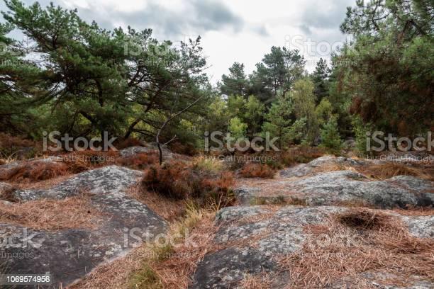 Photo of Fontainebleau Heathland in Summer